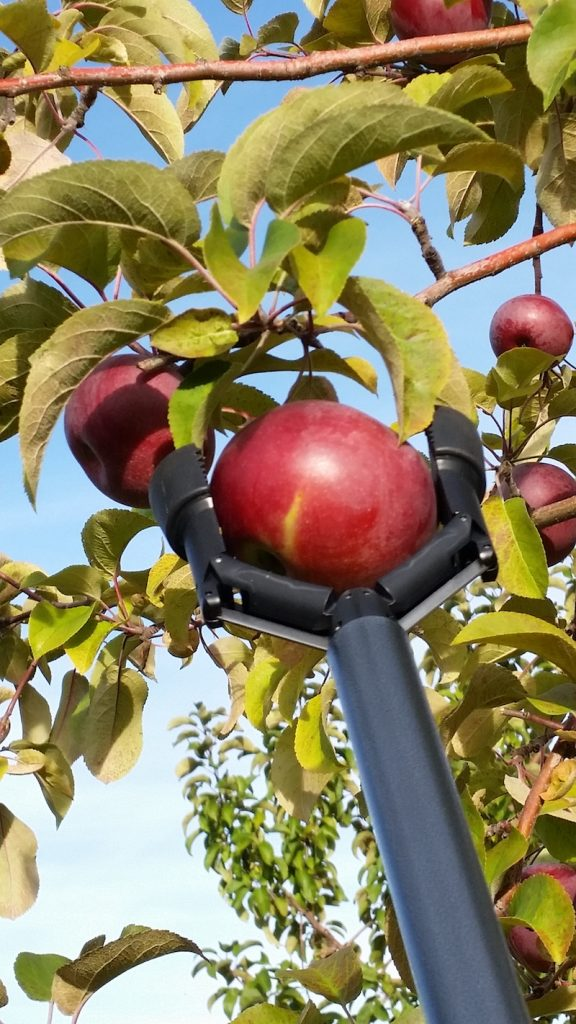 Reaching Grabber Tool For Apple Picking